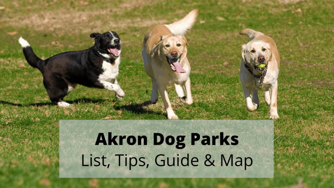 Akron Dog Parks (2020) 🐶 | List, Tips, Guide & Map