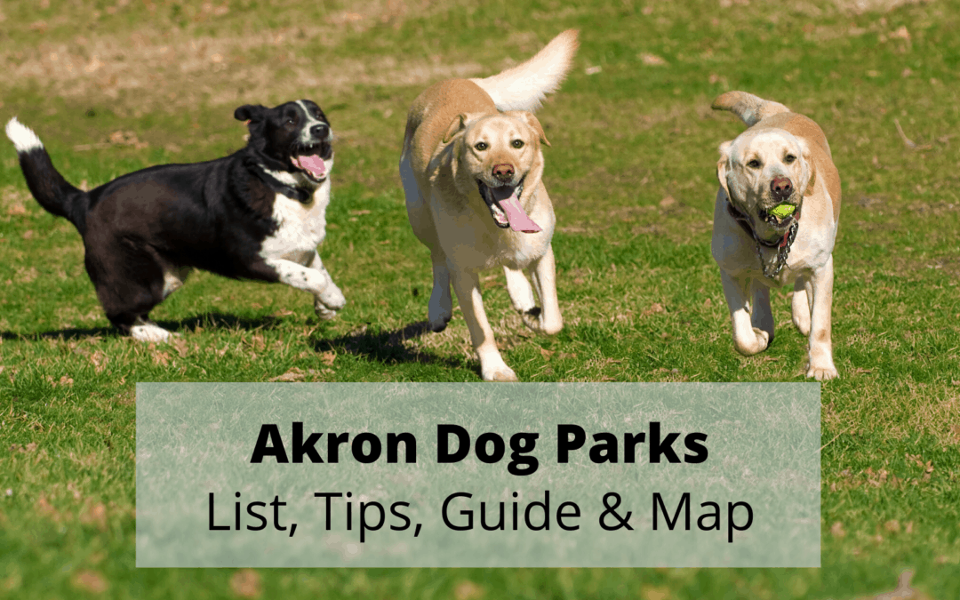 Akron Dog Parks (2020) 🐶   List, Tips, Guide & Map